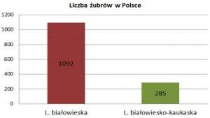 liczna zubrow 2013 w Polsce